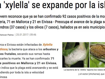 """Control de plagas: La """"xylella fastidiosa"""" afecta a árboles en toda la isla"""