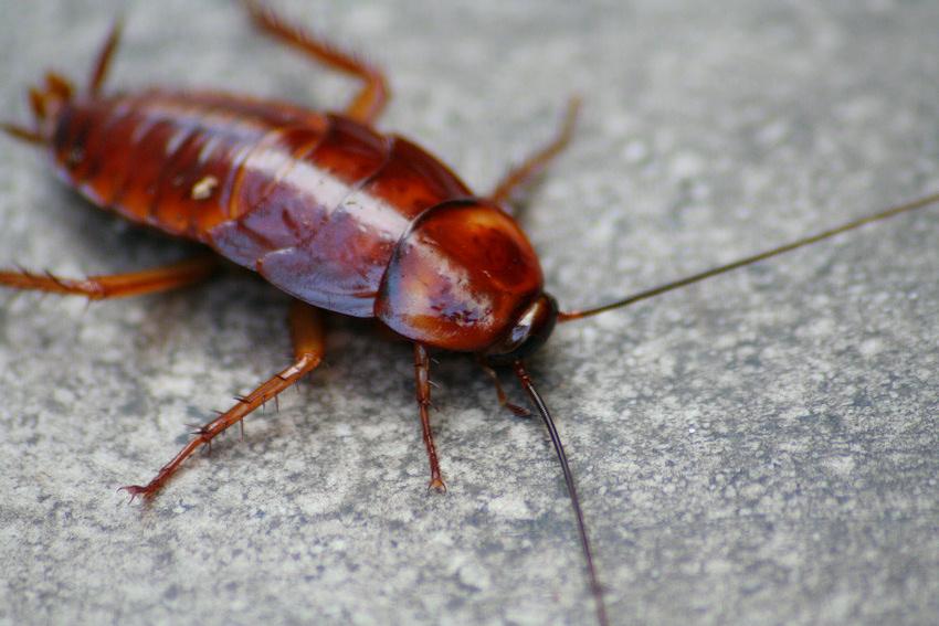 control-de-plagas-cucarachas