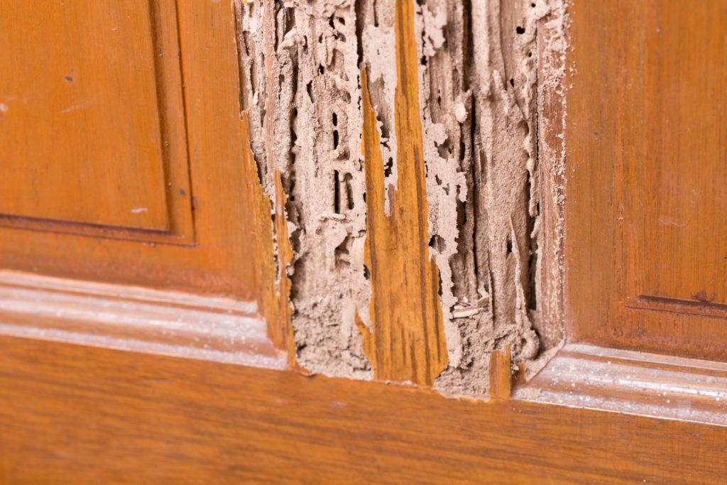 control-de-plagas-mallorca-termitas