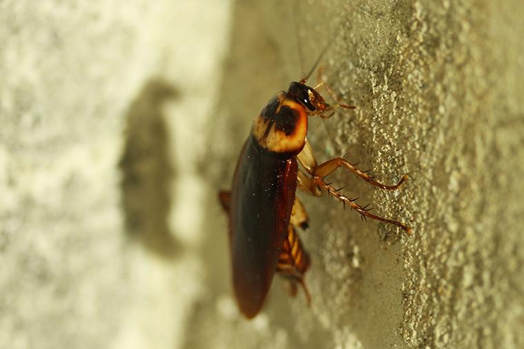 plagas-cucarachas-mallorca-control-historia-1