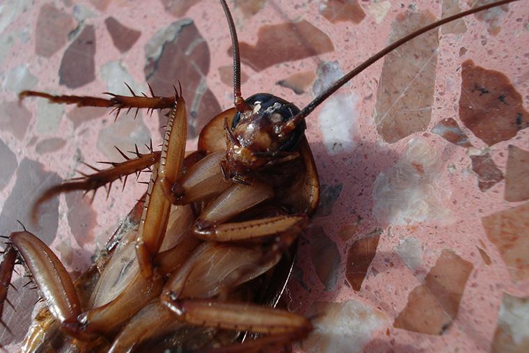 plagas-cucarachas-mallorca-control-historia