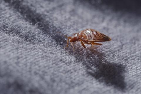 control-de-plagas-mallorca-parasitos