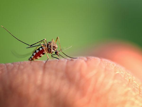 Control de plagas de mosquito tigre en Baleares| Trima Baleares